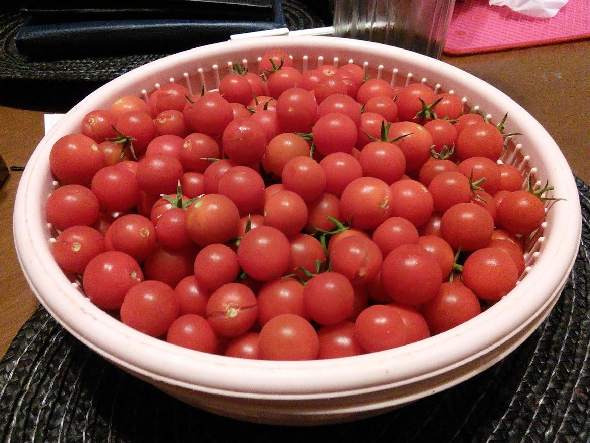 夏場に採れたプチトマト