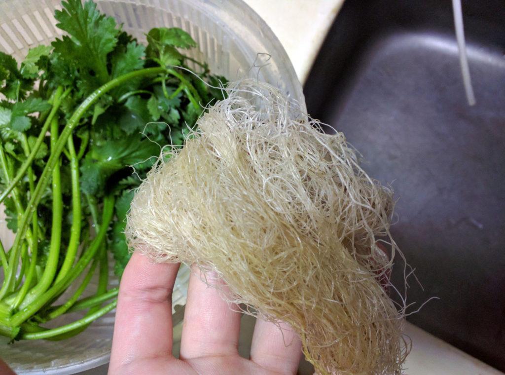 水耕栽培で育てたパクチーの根