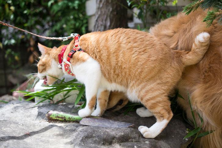 ササを食べる猫