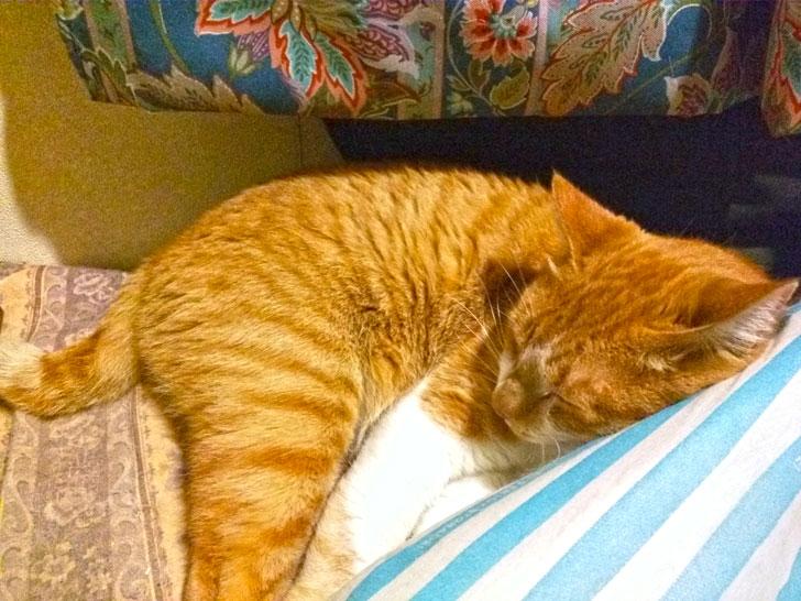 散歩に疲れて寝たネコ