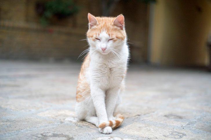 奥ゆかしい猫