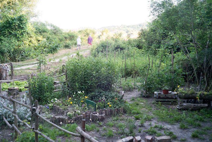 別荘の家庭菜園