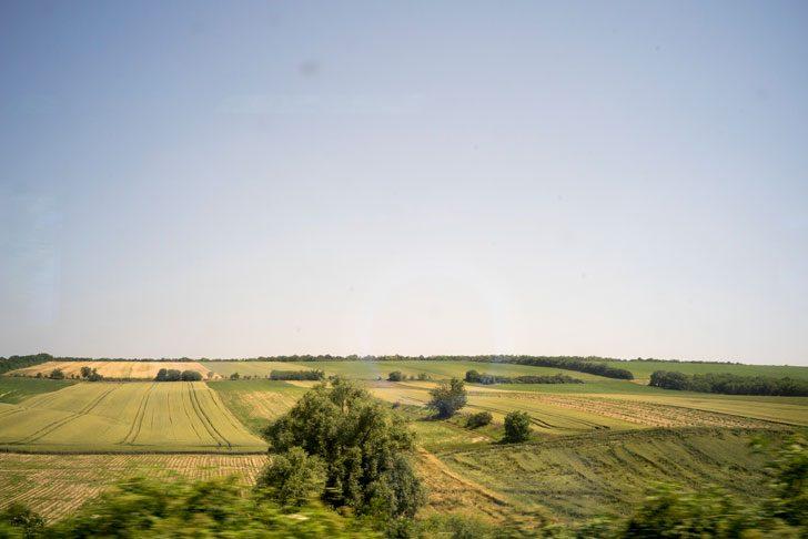ボイボディナ地方の畑風景