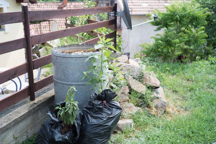 庭先でしている袋栽培